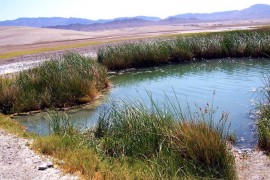 Tecopa Hot Springs